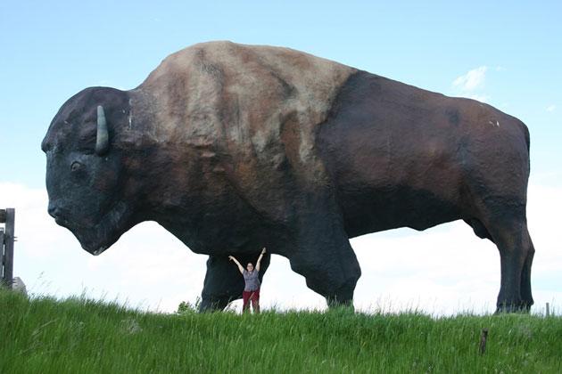 jamestown buffalo